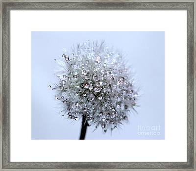 Diamonds Of Nature Framed Print by Krissy Katsimbras