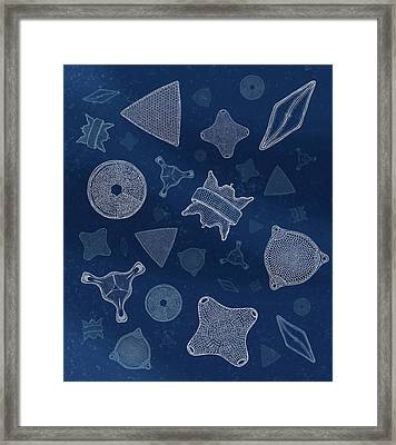 Diatoms Framed Print by Carl Conway