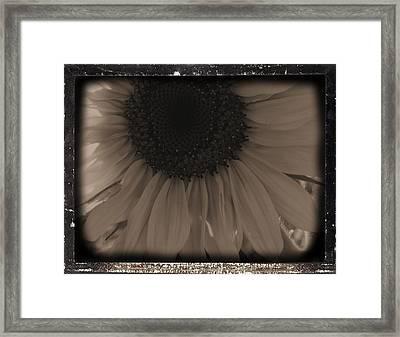 Diatrop Three Quarter Sunflower Framed Print by Sonya Chalmers