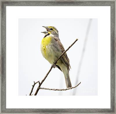 Framed Print featuring the photograph Dickcissel  by Ricky L Jones