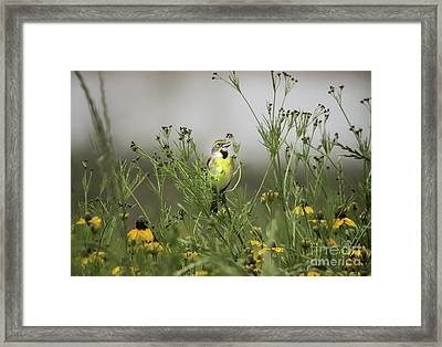Framed Print featuring the photograph Dickcissel With Mexican Hat by Robert Frederick