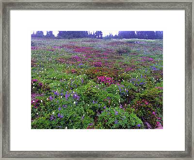 Dickerman Floral Meadow Framed Print