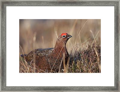 Did I Overdo It With The Eye Shadow? Framed Print