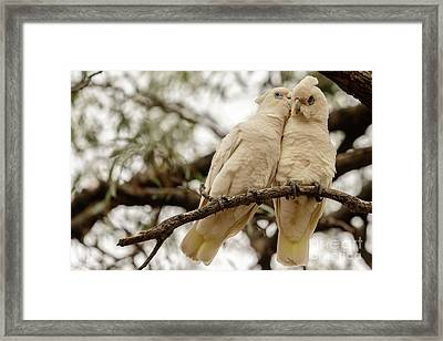 Did You Hear The One About ... Framed Print