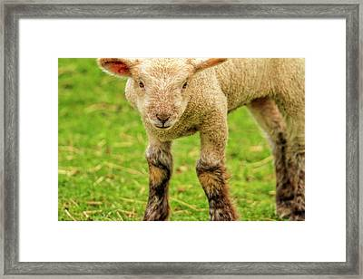 Did You See My Mama Framed Print by Geraldine Scull