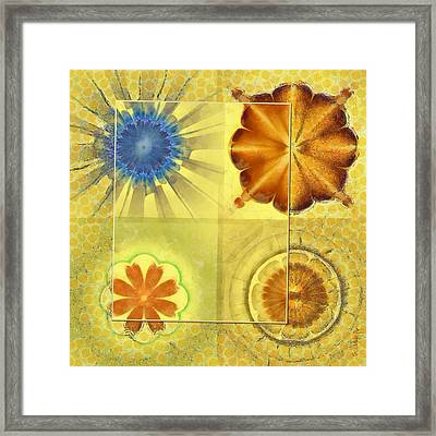 Didactic Rainbow Flower  Id 16165-120332-39891 Framed Print by S Lurk