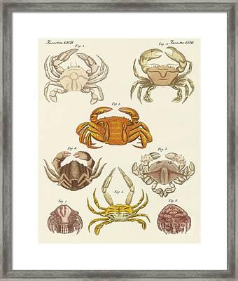 Different Kinds Of Crabs Framed Print