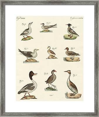 Different Kinds Of Waterbirds Framed Print