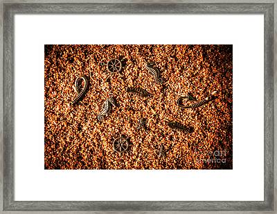 Different Marine Pendants On Sand Framed Print by Jorgo Photography - Wall Art Gallery