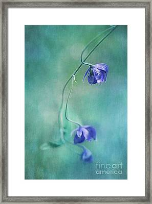 Different Perspective Framed Print by Priska Wettstein