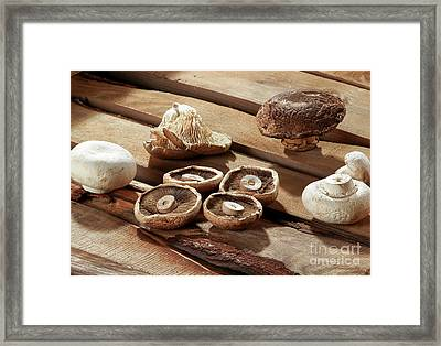 Different Types Of Mushrooms Framed Print by Amit Strauss