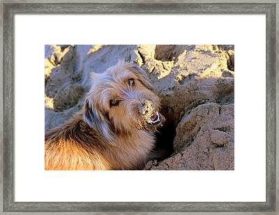 Digging For Crabs Framed Print by Fiona Kennard