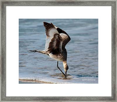 Digging For Dinner Framed Print by Adam Jewell