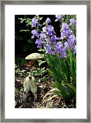 Digging Iris Bulbs Framed Print by Lesa Fine
