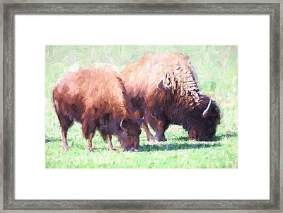 Digital Painting Two Bison Framed Print