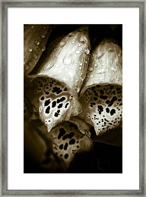 Digitalis Framed Print by Frank Tschakert