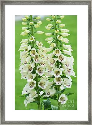 Digitalis Purpurea Primrose Carousel Framed Print by Tim Gainey