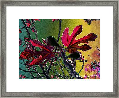 Fig Tree Leaves 2 Framed Print by Don Pedro De Gracia