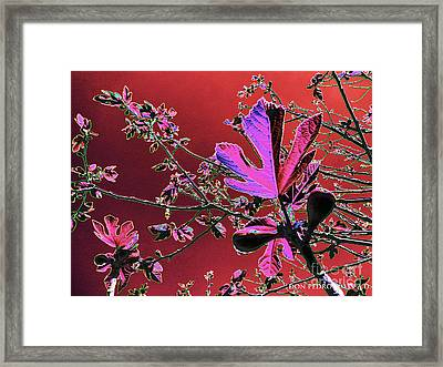 Figtree Leaves 3 Framed Print by Don Pedro De Gracia