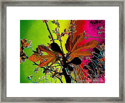 Figtree Leaves 4 Framed Print by Don Pedro De Gracia