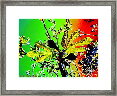 Fig Tree Leaves Framed Print by Don Pedro De Gracia