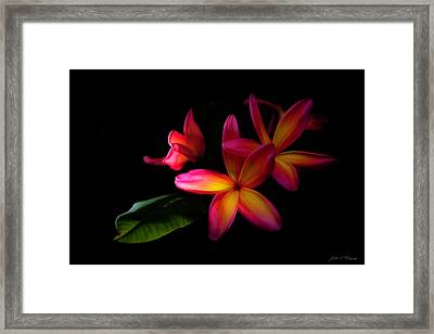 Digitized Sunset Plumerias  Framed Print