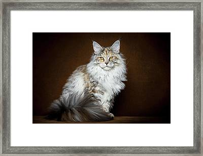 Dignified Lady Framed Print by Robert Sijka