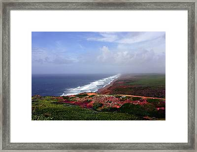 Flowering Beach Point Reyes Lighthouse Bodega Bay Framed Print