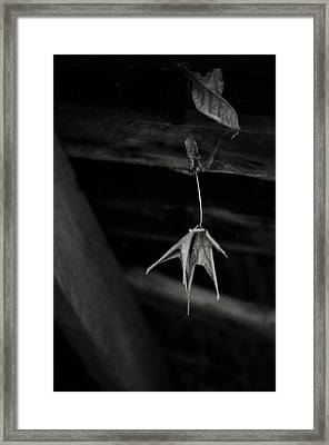 Dim Secrets Framed Print