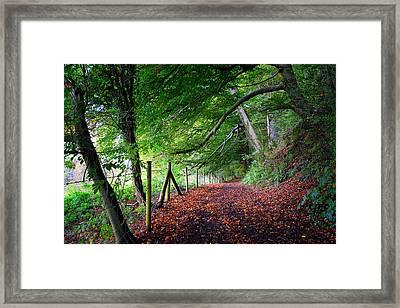 Dinefwr Park 1 Framed Print