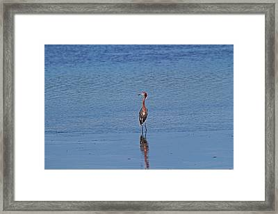 Framed Print featuring the photograph Ding Darling's Number One IIi by Michiale Schneider