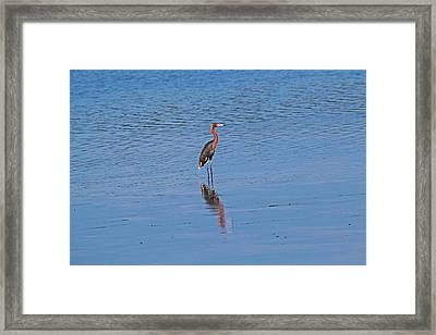 Framed Print featuring the photograph Ding Darling's Number One by Michiale Schneider