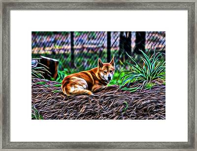 Dingo From Ozz Framed Print