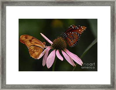Dinner Date Framed Print by Cindy Manero