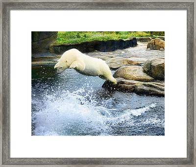 Dinner Dive Framed Print