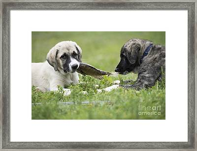 Dinner For Two Framed Print by Juli Scalzi