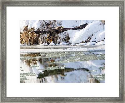 Dinner On Ice Framed Print by Mike Dawson
