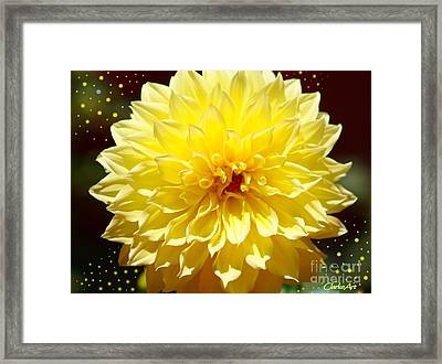 Dinner Plate Dahlia In Starry Sky Framed Print