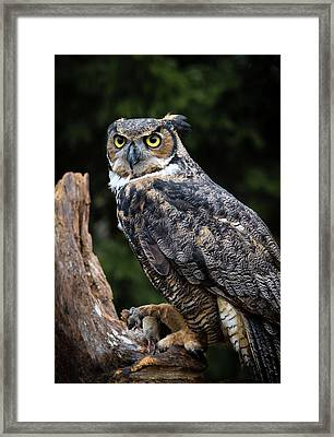 Dinner Time Framed Print by Tracy Munson