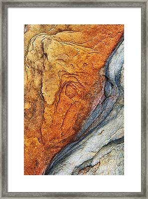 Dinosauric Framed Print by Tim Gainey