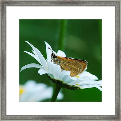 Dion Skipper In Square Framed Print