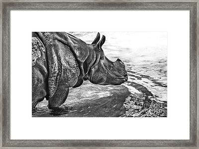 Dip In The Pool Framed Print