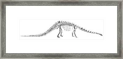 Diplodocus Carnegii Framed Print by Science Source
