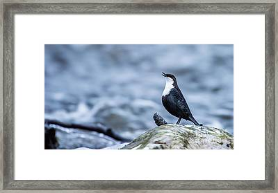 Framed Print featuring the photograph Dipper's Call by Torbjorn Swenelius