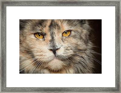 Direct Look Framed Print