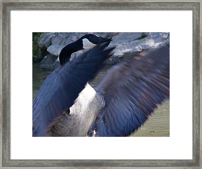 Director Framed Print by Betsy Knapp