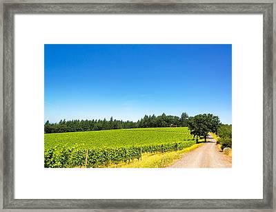 Dirt Road In Vineyard Framed Print by Jess Kraft