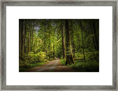 Dirt Road On Vancouver Island Framed Print by Randall Nyhof