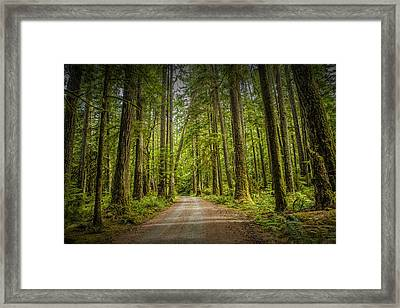 Dirt Road Through A Rain Forest On Vancouver Island Framed Print by Randall Nyhof