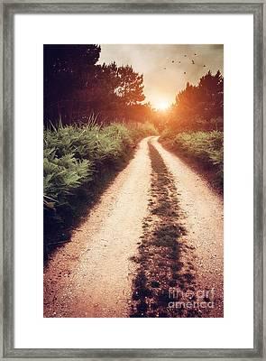Dirt Trail Framed Print by Carlos Caetano